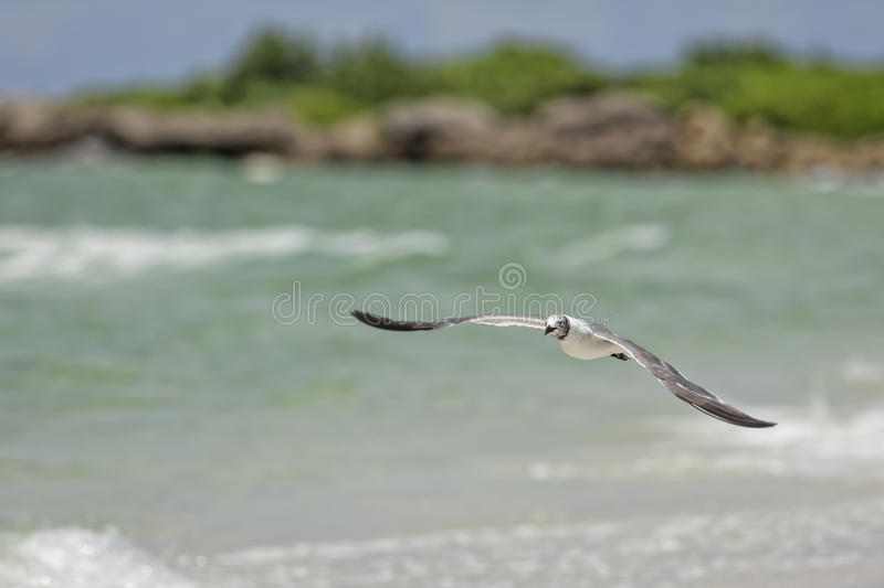 Seagull stock photography