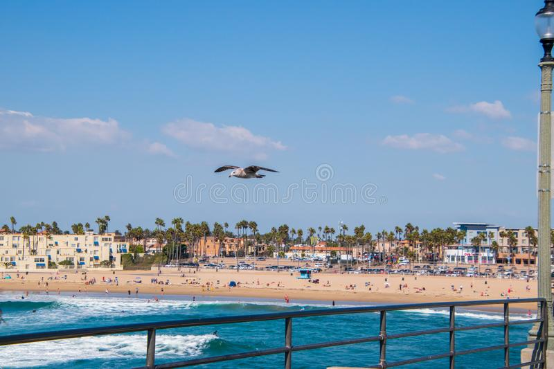 Seagull flying over ocean by railing of pier with landscape of beach in background. stock images