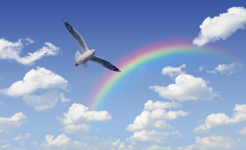 Seagull flying over rainbow with white clouds and blue sky, Free. Dom concept stock images