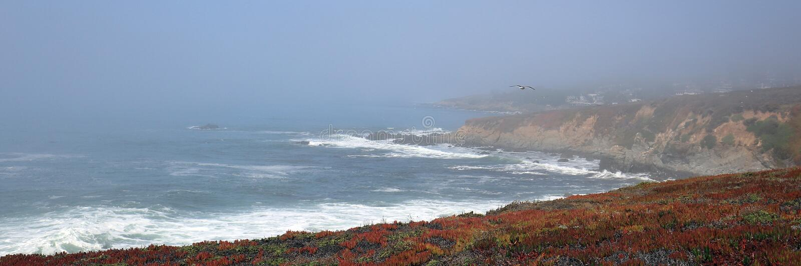 Seagull flying over rugged Central California coastline at Cambria California USA stock images