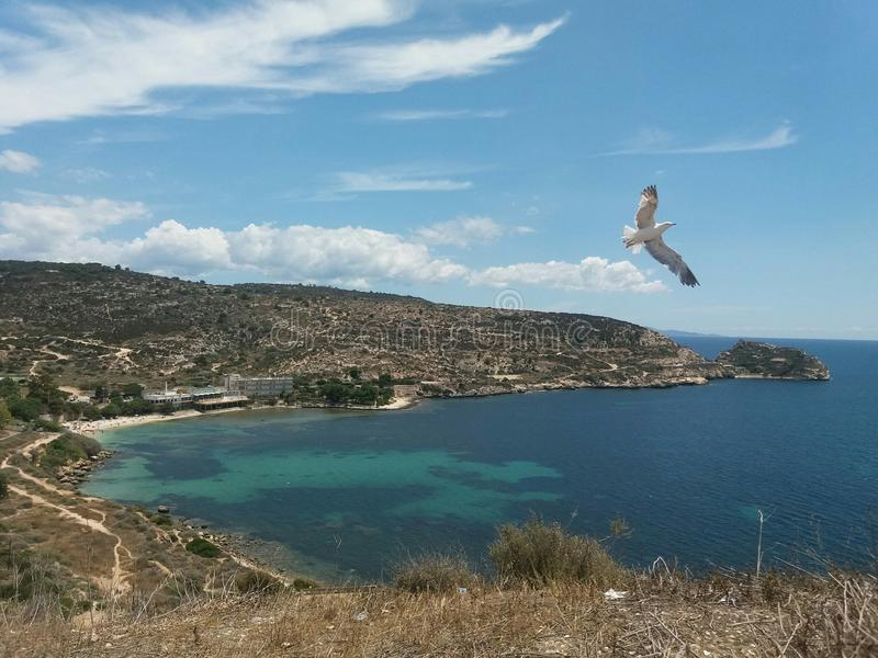 Seagull flying over the sea in Sirdinia. Seagull flying     over sirdinia calamosca cagliari nature ocean  bluewater italy beach sky side pureair breathe stock photography
