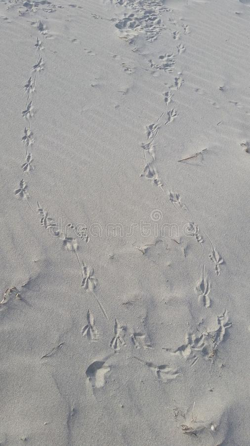 Seagull Footprint stock photography