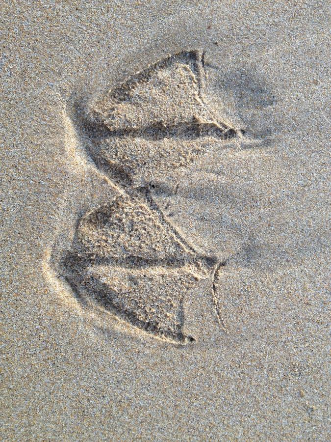 Seagull footprint royalty free stock images