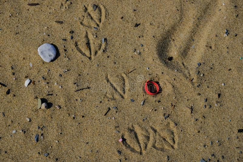 Seagull footprints on plastic polluted sandy beach ecosystem royalty free stock photography