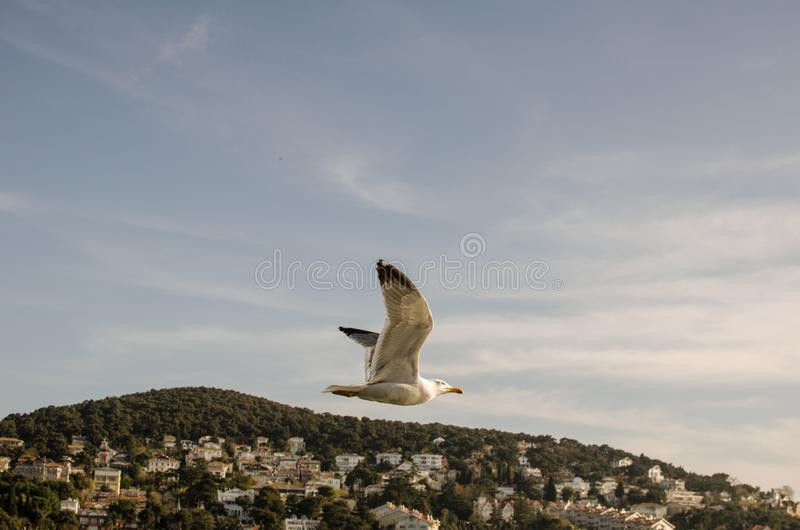 Seagull and free II royalty free stock image