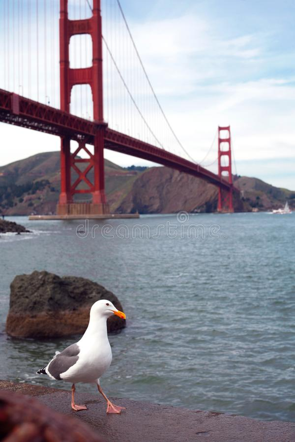 A Seagull in front of Golden Gate Bridge royalty free stock image