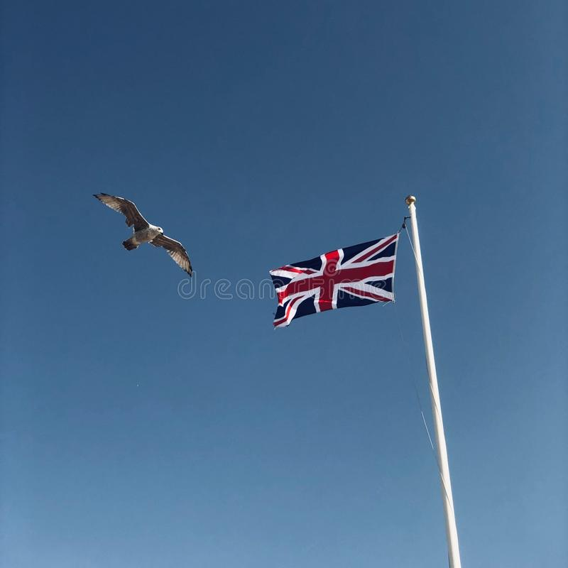 Seagull in front of union jack stock photography