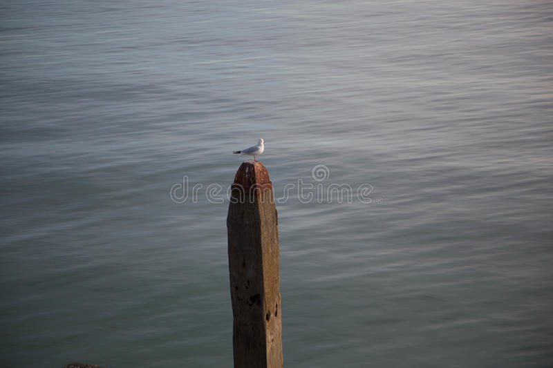Seagull in Hastings stock photos