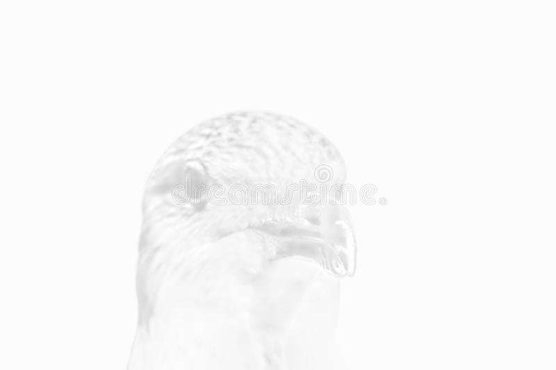 A Seagull Head Illustration - Black and White royalty free stock photography