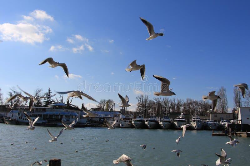 Seagull Hey thoes πάλη για την πάλη αέρα anf για τα τρόφιμα στοκ φωτογραφία με δικαίωμα ελεύθερης χρήσης