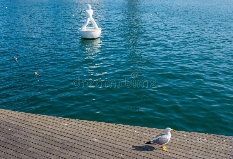Seagull i Barcelona royaltyfri fotografi