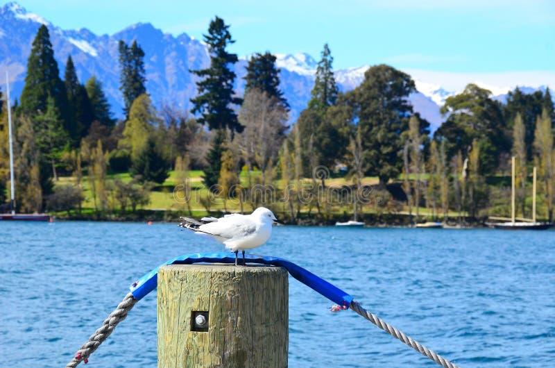 Seagull i berg arkivbild