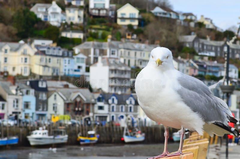 Seagull i en typisk brittisk sjösidastadinställning arkivfoton