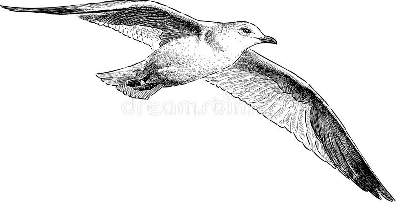 Seagull i flyg stock illustrationer