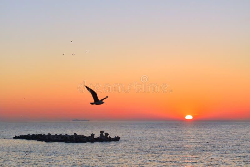 Seagull i morgonen royaltyfria bilder