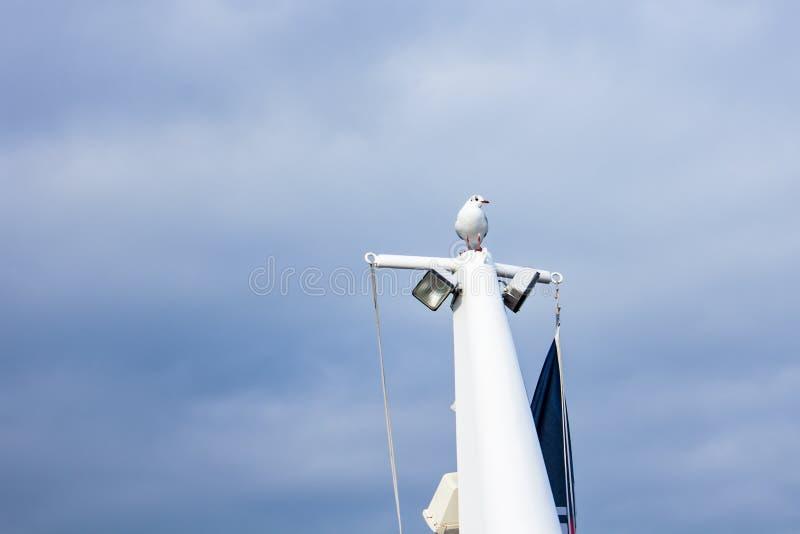Seagull i Volendam, Nederländerna arkivbild