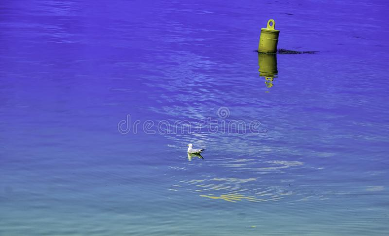 A seagull in the immensity. This buoy accompanies this bird in the blue water of the ocean.Carleton, Quebec, Canada; August 8, 2017 stock photos