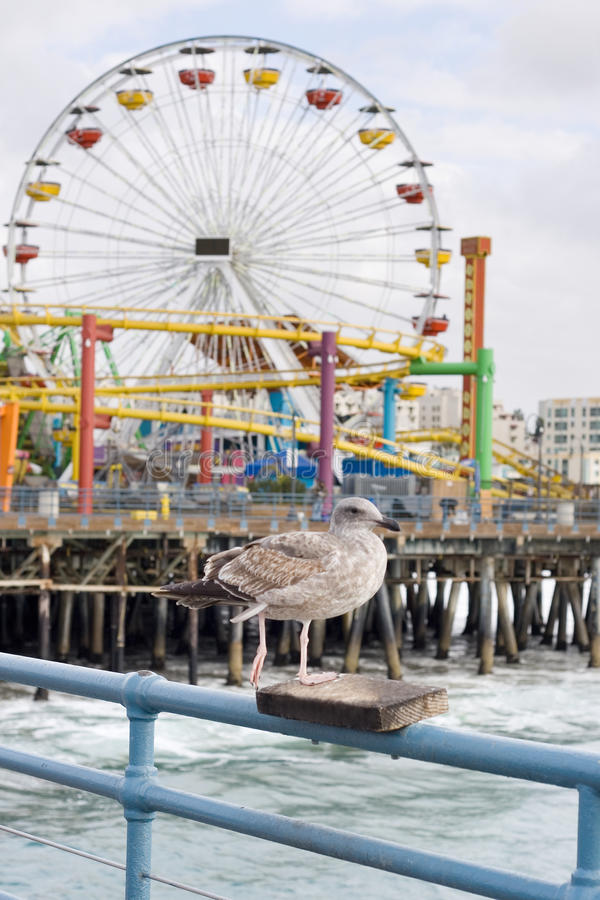 Free Seagull In Pier Royalty Free Stock Photo - 12345495