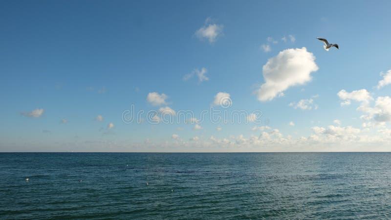 Seagull który wspina się nad spokojnym morzem na tle niebieskie niebo z chmurami, zdjęcia royalty free
