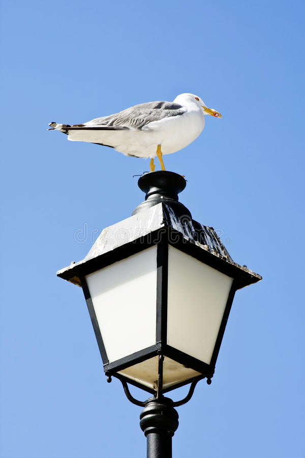 Seagull On Lamp. Royalty Free Stock Photo