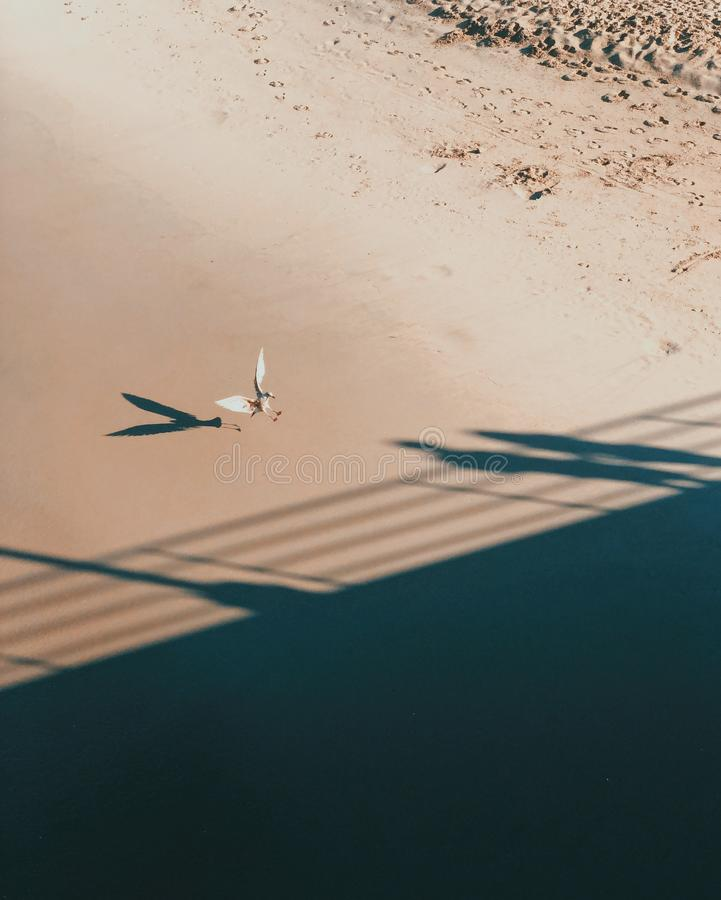 Seagull landing on the sandy beach royalty free stock image