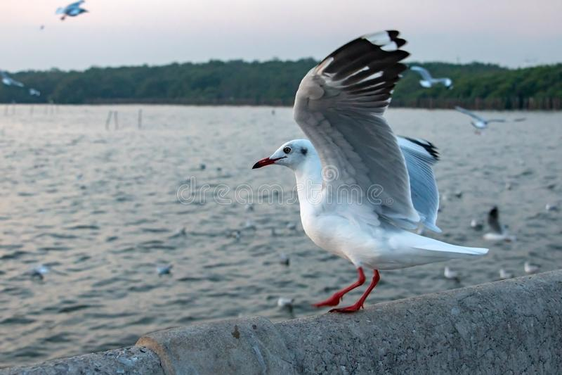 Seagull lands on a concrete railing at pier royalty free stock photo