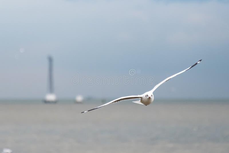 Seagull lata nad morzem na niebieskiego nieba tle obrazy royalty free