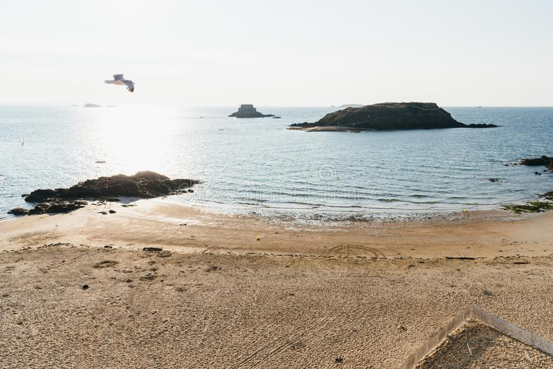 Seagull lata nad pustą plażą Saint Malo obraz stock