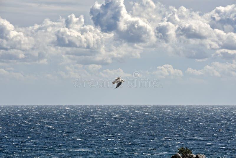 Seagull latanie w Chmurnym niebie Nad Czarnym morzem obraz royalty free