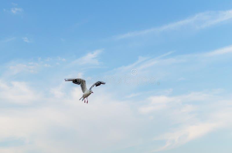 Seagull latanie w niebieskim niebie nad morzem zdjęcia royalty free