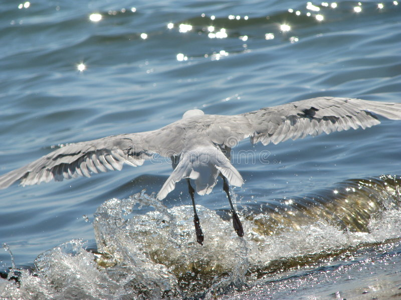 Download Seagull on launch stock photo. Image of nature, wave, flight - 6127470