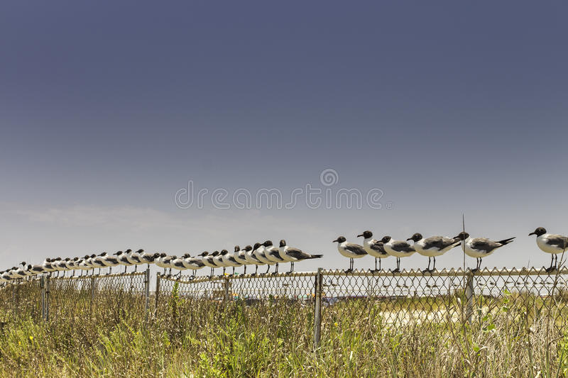 Download Seagull Line stock image. Image of line, water, fence - 32221291