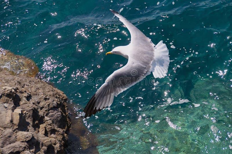 Seagull lot nad morzem obraz royalty free