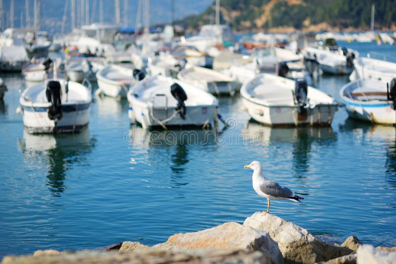 Seagull in marina of Lerici town, a part of the Italian Riviera, Italy. Seagull in marina of Lerici town, located in the province of La Spezia in Liguria, part stock images