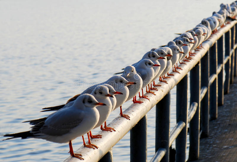 Seagull meeting stock photography