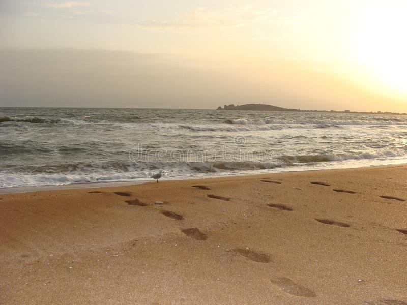 Seagull meets sunrise on the beach. stock photo