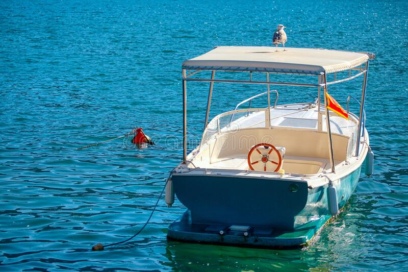 Seagull on the motorboat. Seagull standing on the motorboat royalty free stock photo