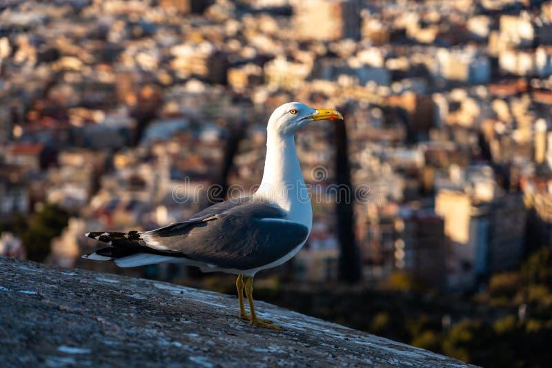 Seagull na ścianach Santa Barbara kasztel w Alicante, Hiszpania zdjęcia stock