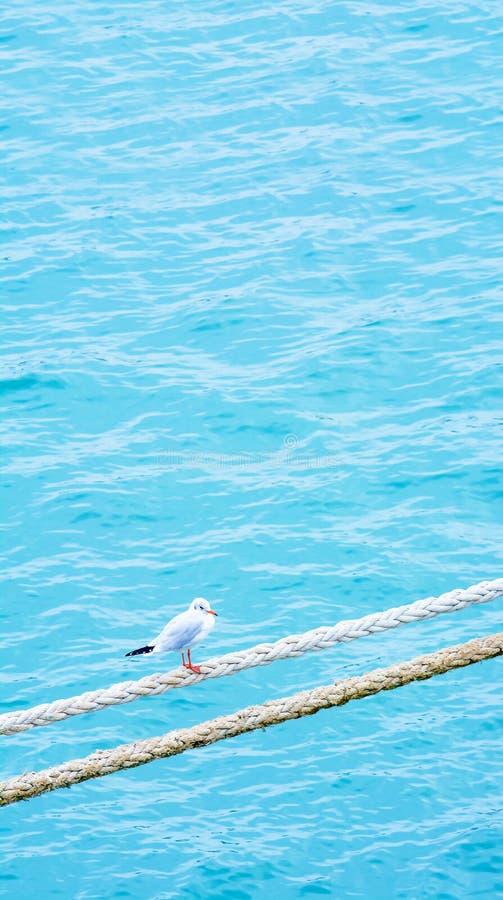 Seagull na arkanie przymocowywający linowy statek Port Morski Jetty fotografia royalty free