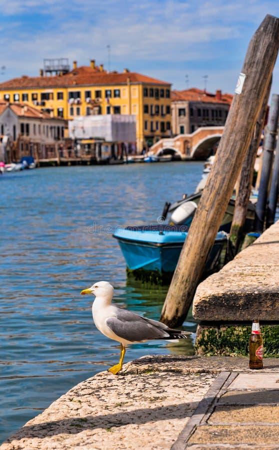 Seagull na brzeg Murano wyspa obraz royalty free