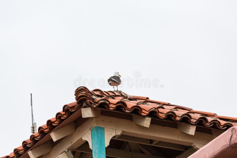 Seagull na Czerwonym Dachówkowym dachu zdjęcia royalty free