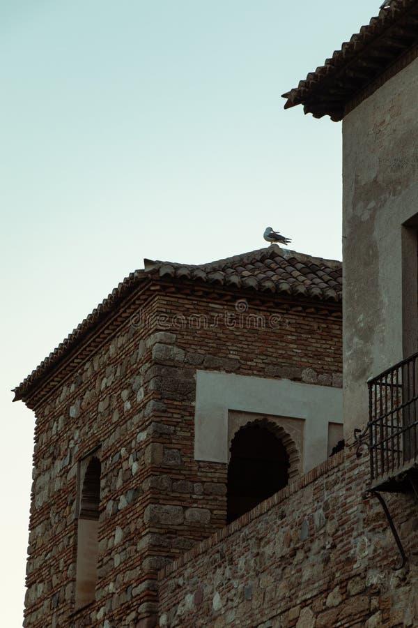 Seagull na dachu stary kamienny budynek fotografia royalty free