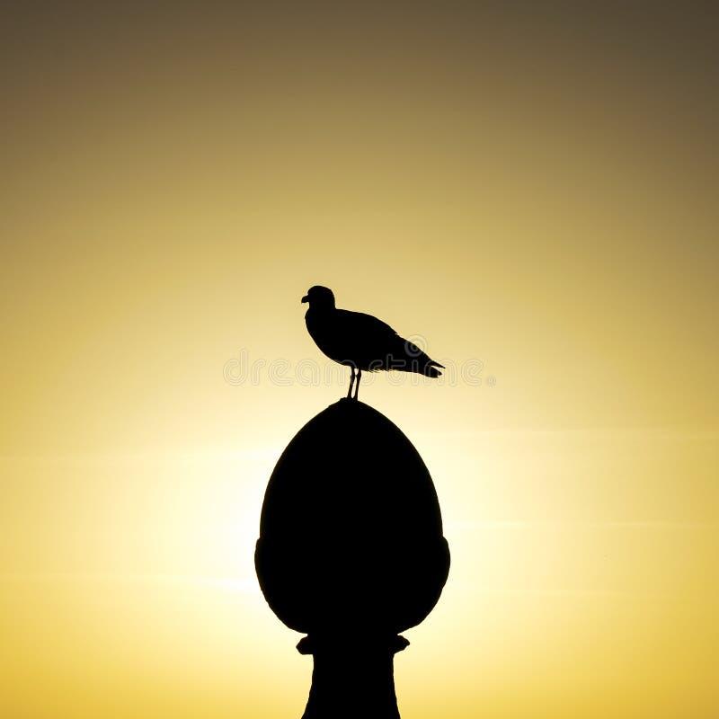 Seagull na górze kamiennej kolumny obraz royalty free