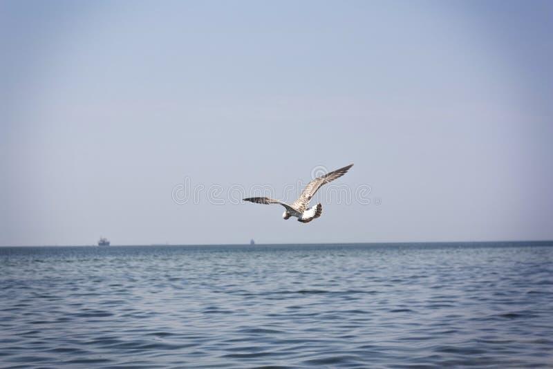 Seagull na plaży obrazy royalty free