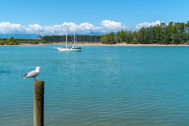 Seagull na poczcie w zatoce obraz stock