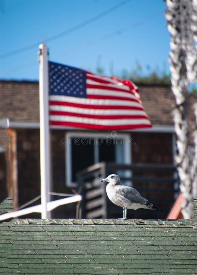 Seagull na wierzchołku zielony gontu dach z zamazanym flagi amerykańskiej lataniem w tle obraz royalty free