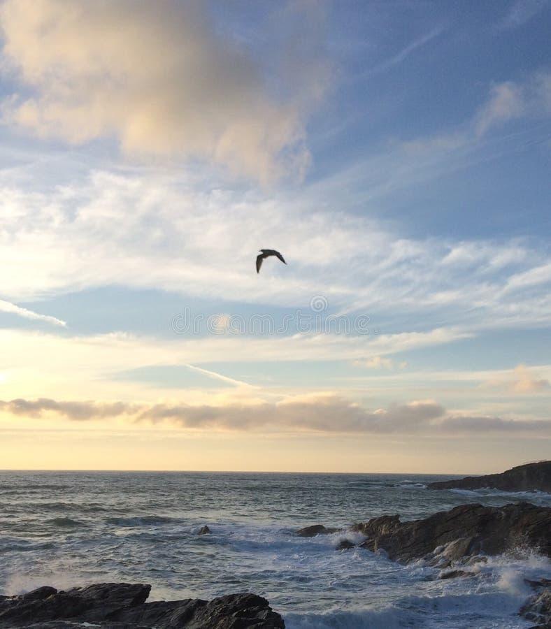 Seagull na wybrzeżu obrazy royalty free
