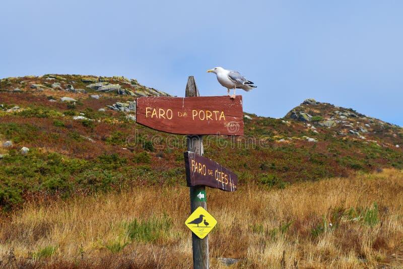 Seagull na znaku, cies wyspy, rezerwat przyrody, Galicia, Spain fotografia stock