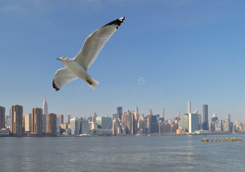 Seagull nad Manhattan zdjęcia stock