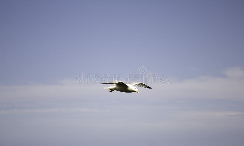 Seagull in park. Seagull in natural park, birds in freedom green background day sunny standing white nature autumn lake latvia summer closeup animal wildlife royalty free stock photo